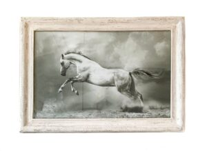 Tavla vit häst